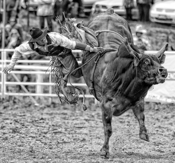 Bull Rider Two