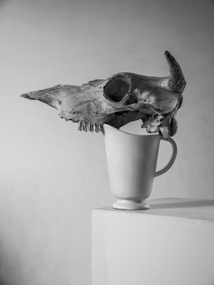 Cow skull and white pitcher.