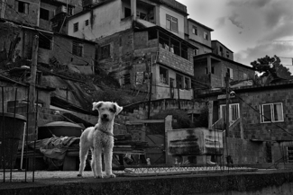 New Life in the Favela