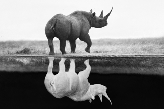 Rhino Extinct