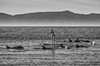 Paddles With Dolphins