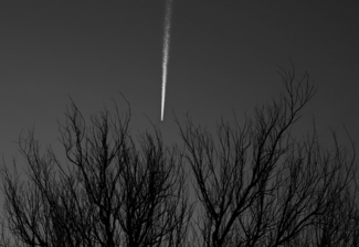 Late Evening Contrail Over Nebraska Cottonwoods
