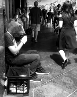 Man as a horse stops for a drink