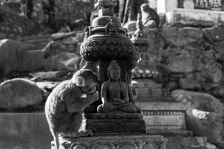 Monkey understand about bowing to the Buddha