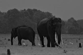 Tusker on Move