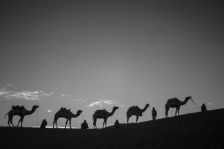 Caravan in the Great Thar Desert