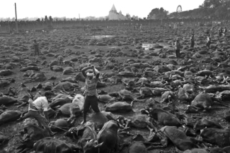 The World's Largest Ritual Slaughter
