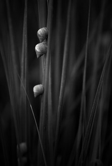 Snails on Sea Grasses