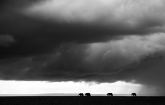 Elephants under Thunder Skies