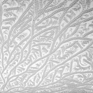 frost patterns