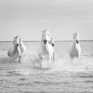 Water Gallop