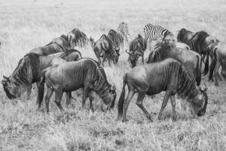 The Masai Mara Canvas