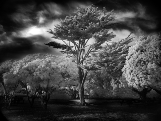 Wind Swept Tree