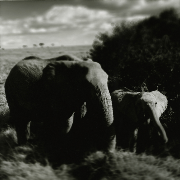 Mother with baby - African elephants, Masai Mara
