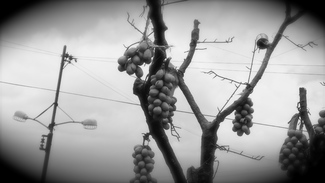 CITY GRAPES