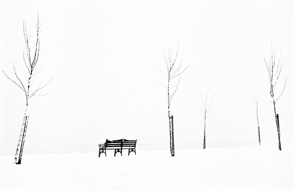 Bench and Saplings in Snow