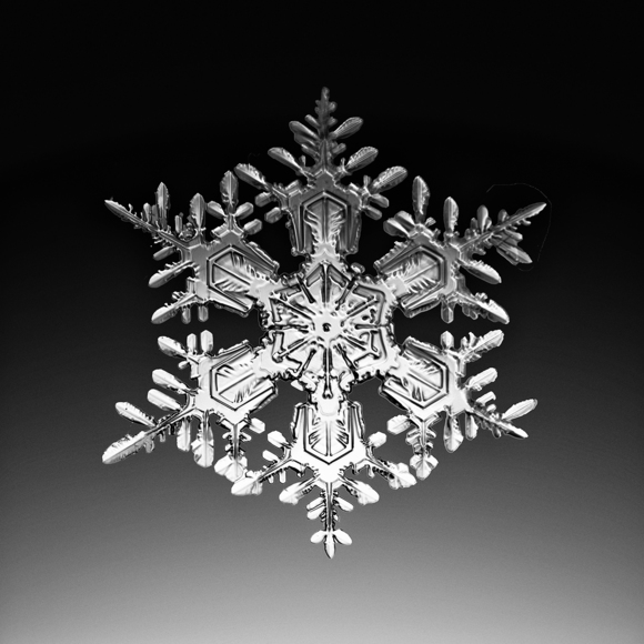 A snow crystal