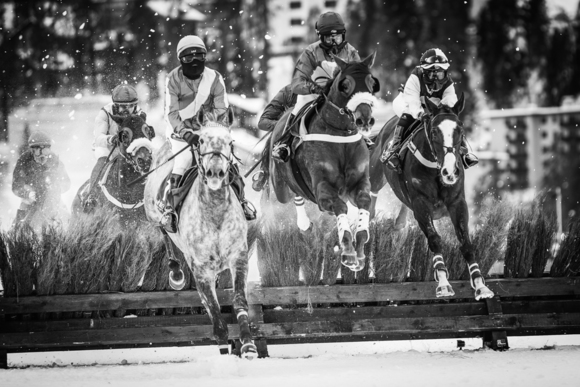 White Turf Race-Competition