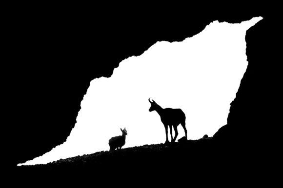 Hulik-Tomas_Chamois in cave