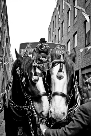 Vintage brewery dray & horses - London