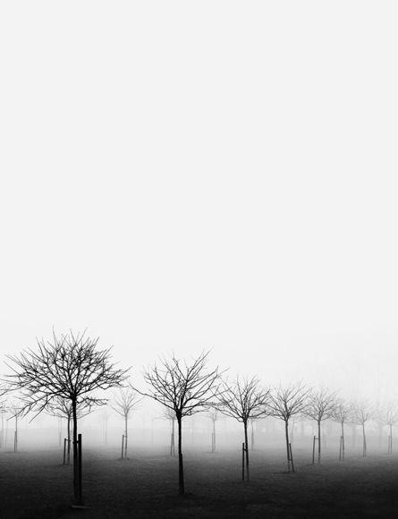 Apple Trees in the Mist