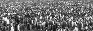 King Penguin Gathering