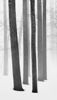 Wintry Woodland #2