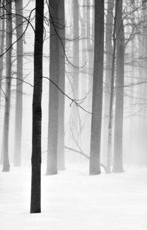 Wintry Woodland #7