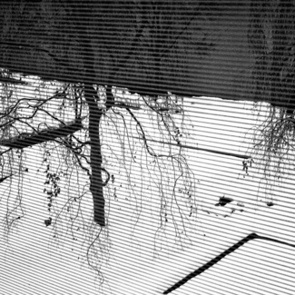 Courtyard Through Blinds