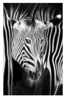 Zebra Illusions in BW