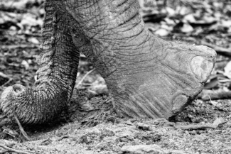 Trunk and Toe