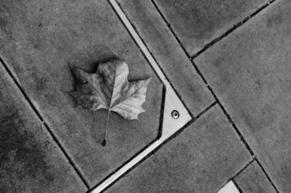 A leaf in London