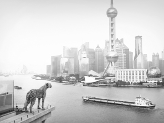 Lost Animals, Cheetah in Shanghai