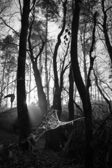 Web in Woods