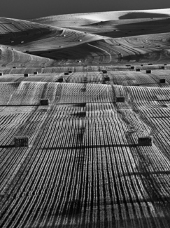 Palouse Rows