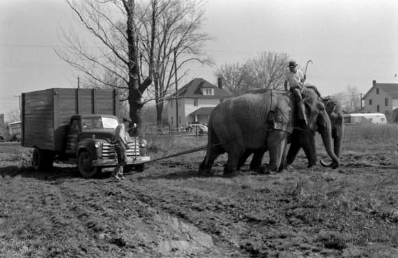 Elephants Pull Circus Truck