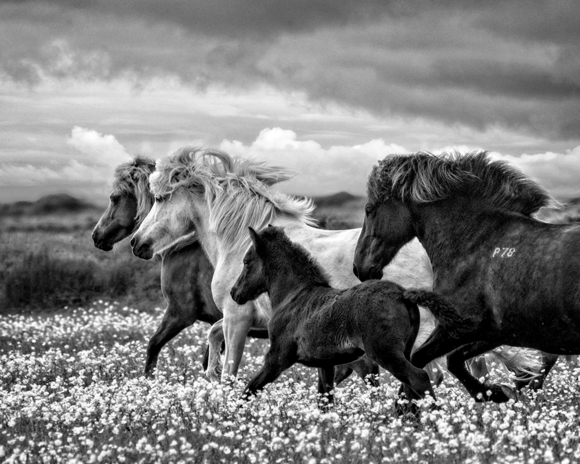 March Of The Mares