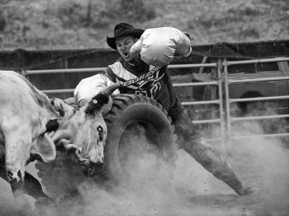 Bull and Rodeo Clown