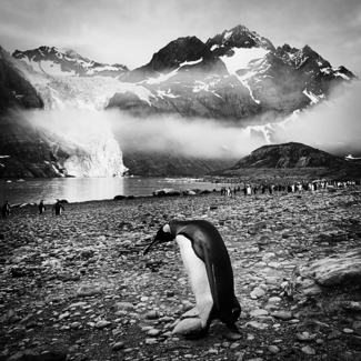 Lonely Penguin