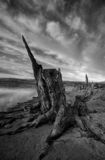 Jindabyne Stump
