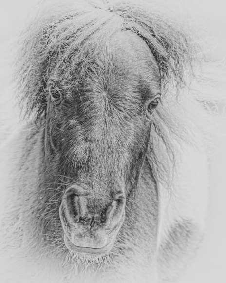 Portrait of Pony