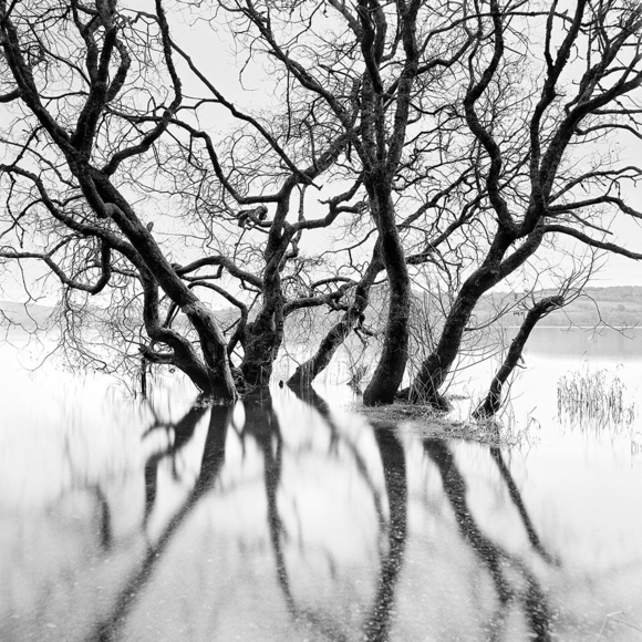 Submerging Trees, Scotland 2013