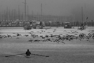 Training with Cormorants
