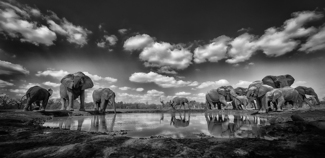 Elephant watering hole