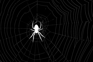 The Black and White Spider Image