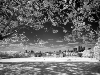 Greenwich Park Infra red 2