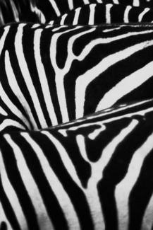 Zebra Strip
