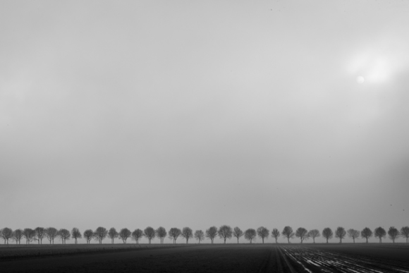 Trees in Fog, Schokland, Netherlands