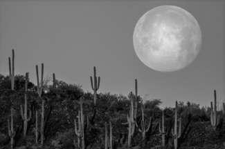 Moonset over Sonoran Desert Arizona