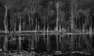 Woodland Reflection 2